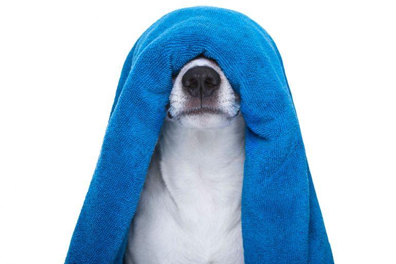 Viridea igiene del cane