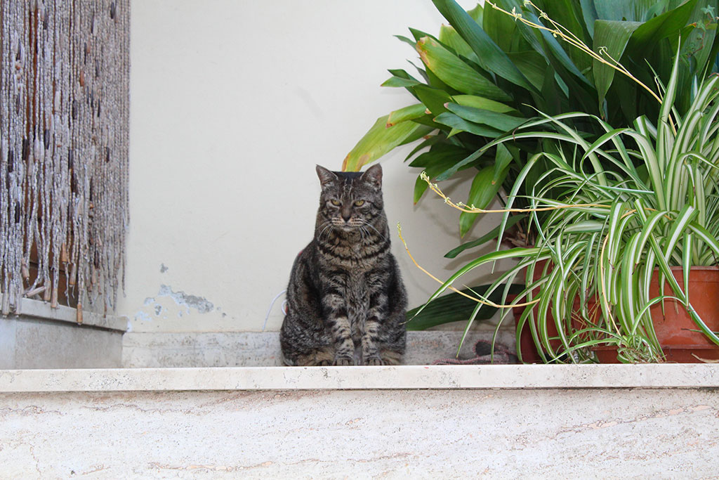 gatto outdoor