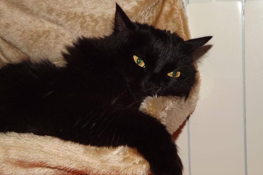 gatto indoor