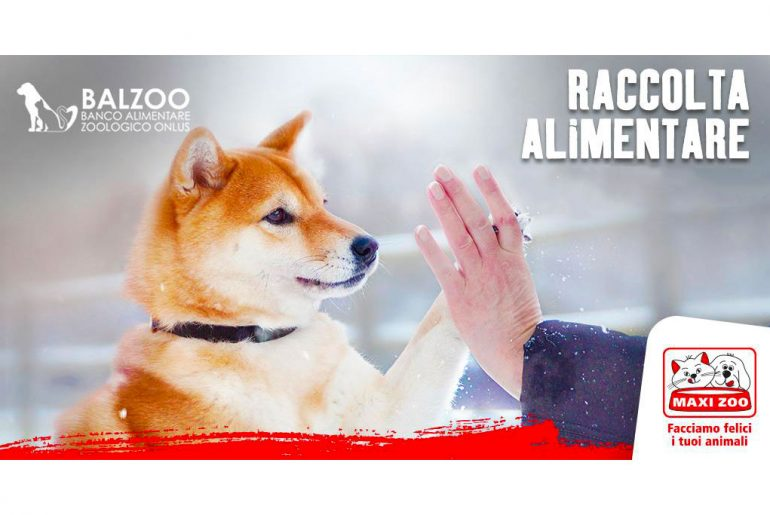 maxi zoo e balzoo