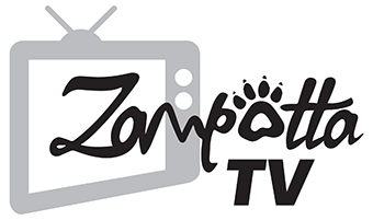 zampotta tv