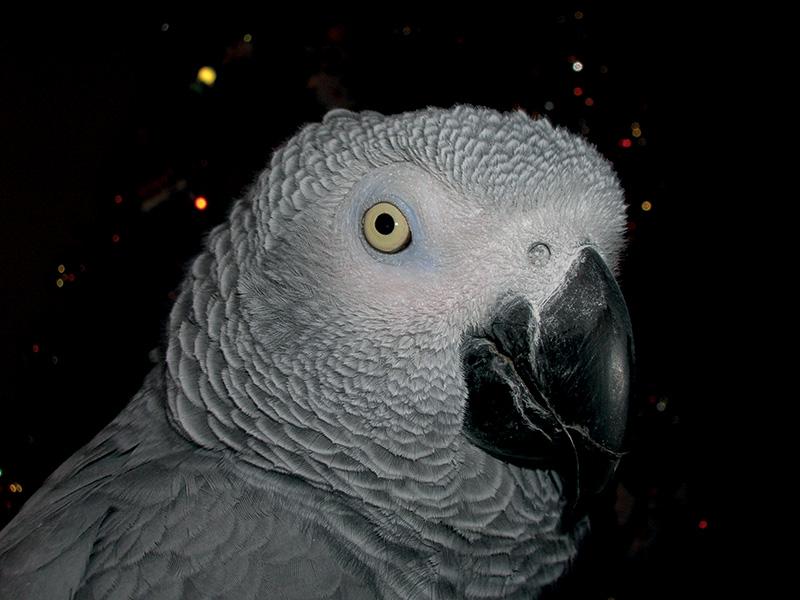 uccelli zampotta
